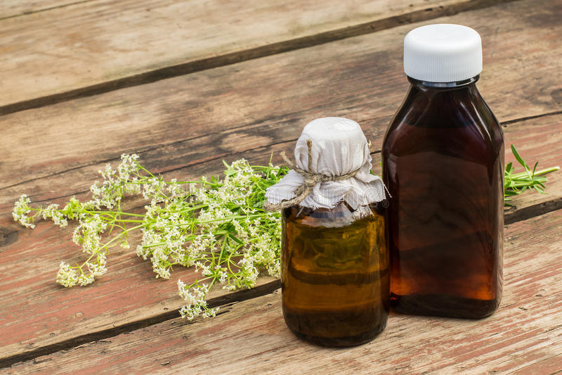 Galium da planta medicinal b do mollugo (bedstraw da conversão ou bebê falso imagem de stock