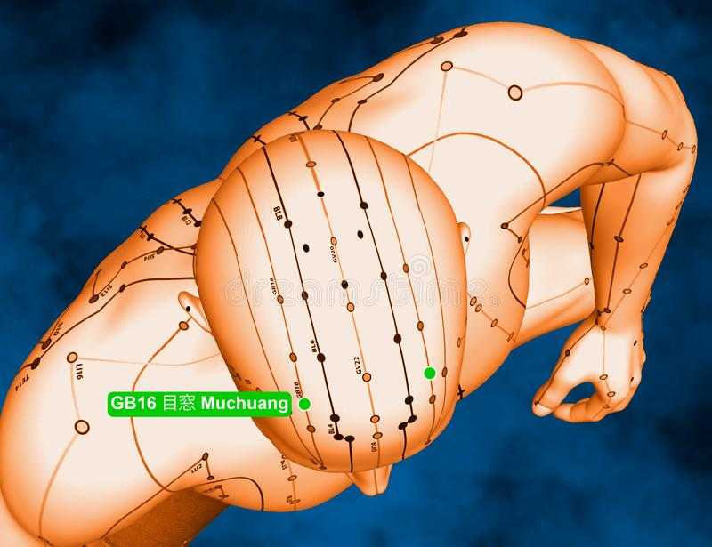 Acupuncture Point GB16 Muchuang, 3D Illustration, Blue Background stock photo