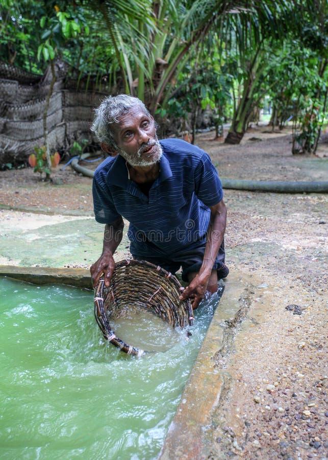 Galle, Sri Lanka - 14 de abril de 2017: Rodilla local del hombre profundamente en el agujero f fotografía de archivo