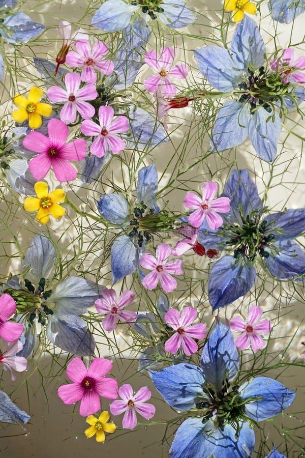Galleggiamento dei fiori immagine stock
