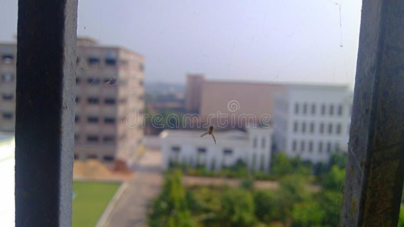 Galler för spindelvågfönster vid Chiranjit arkivfoto