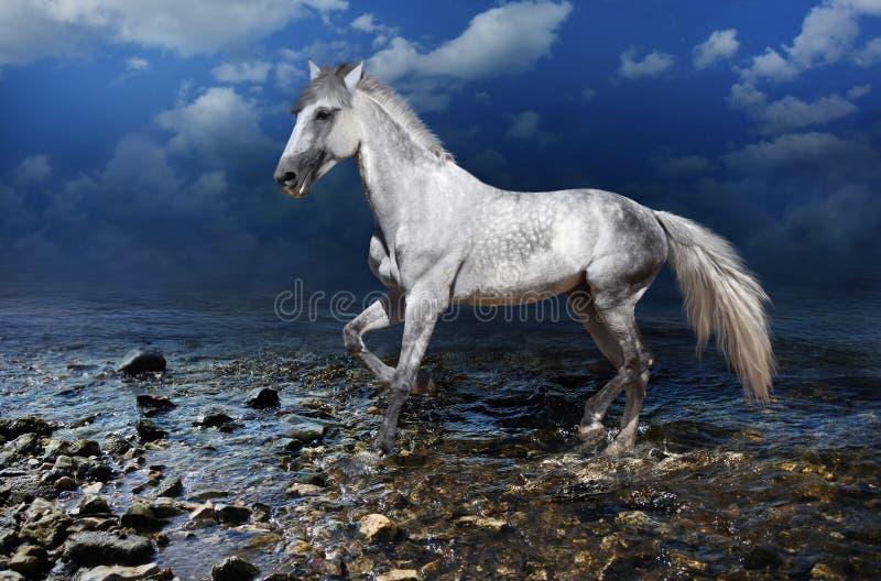 Galles de cheval blanc sur l'eau photo libre de droits