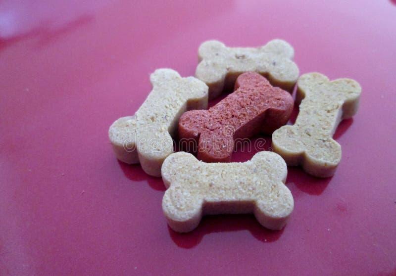 Galletas de perro formadas hueso usadas como invitaciones imagen de archivo libre de regalías