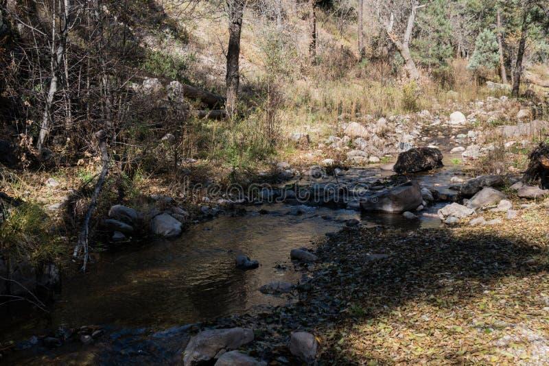 Gallinas Creek flows in New Mexico. Gallinas Creek flows in the mountains of southwest New Mexico near Silver City royalty free stock photos