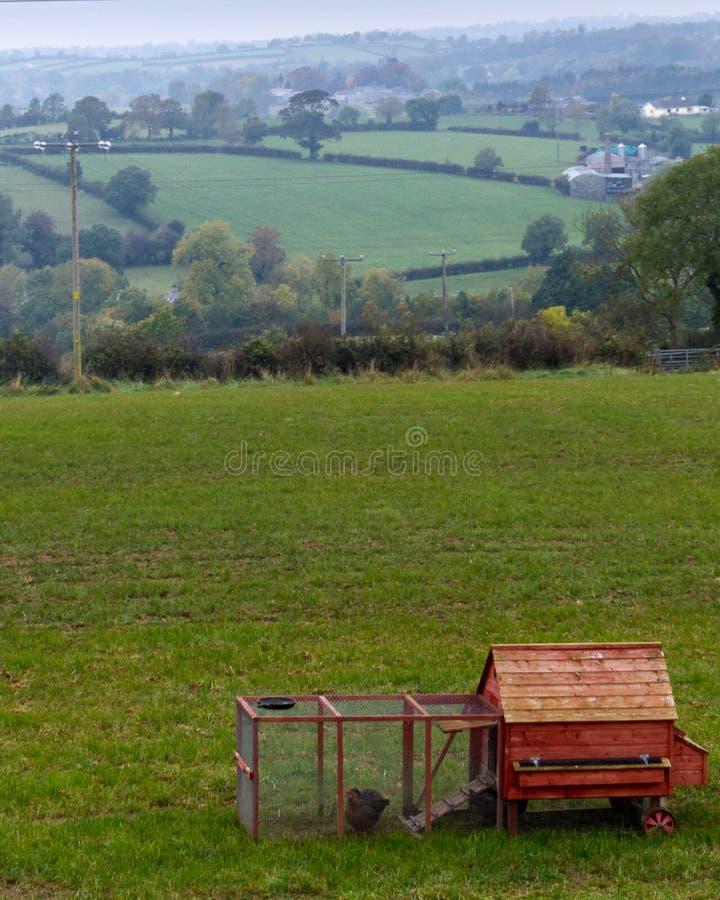 Gallinero de pollo rojo en las tierras de labrantío rurales de Irlanda del Norte imagen de archivo