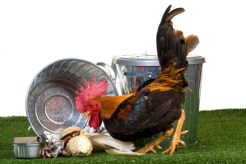 Gallo con los cubos de basura y la basura foto de archivo libre de regalías