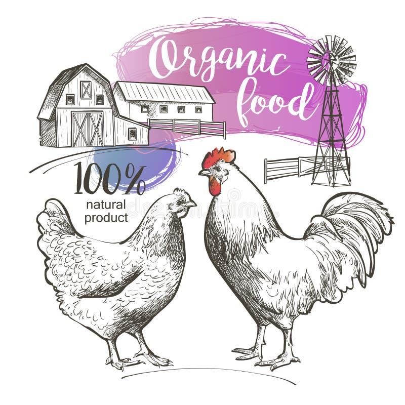 Gallo della gallina del pollo, illustrazione vettoriale
