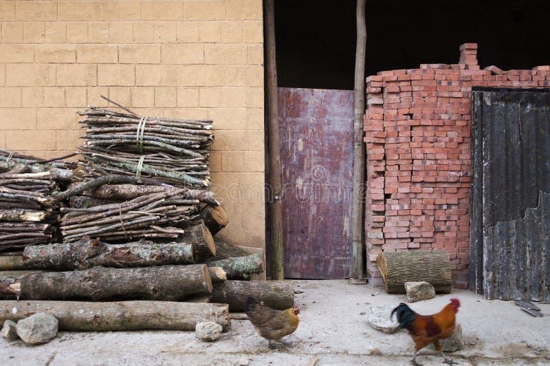 Gallo e gallina che ritornano a casa immagine stock