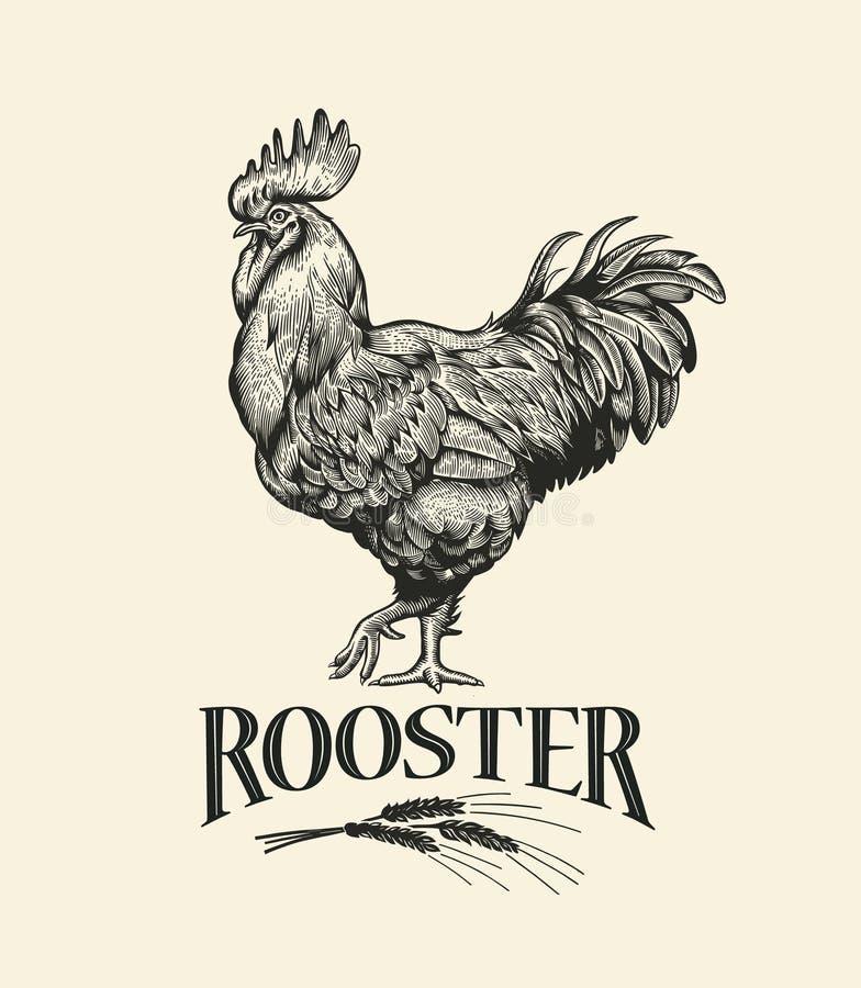 Gallo Ejemplo del gallo en estilo del grabado del vintage Etiqueta del grunge del gallo stock de ilustración