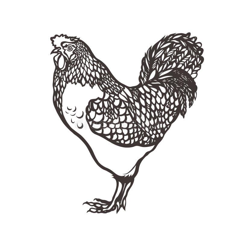 Gallo poultry Gallo pintado con tinta Etiqueta para los productos del pollo farming Aumento del ganado Mano drenada ilustración del vector