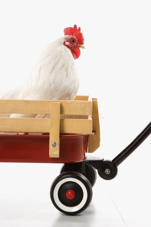 Gallo in vagone rosso. immagine stock libera da diritti