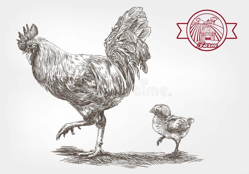 Gallo y pollo ilustración del vector