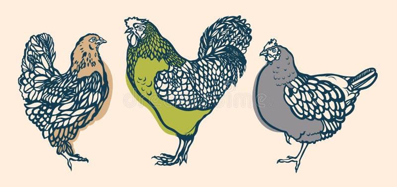 Gallo y pollo poultry farming Aumento del ganado Mano drenada stock de ilustración