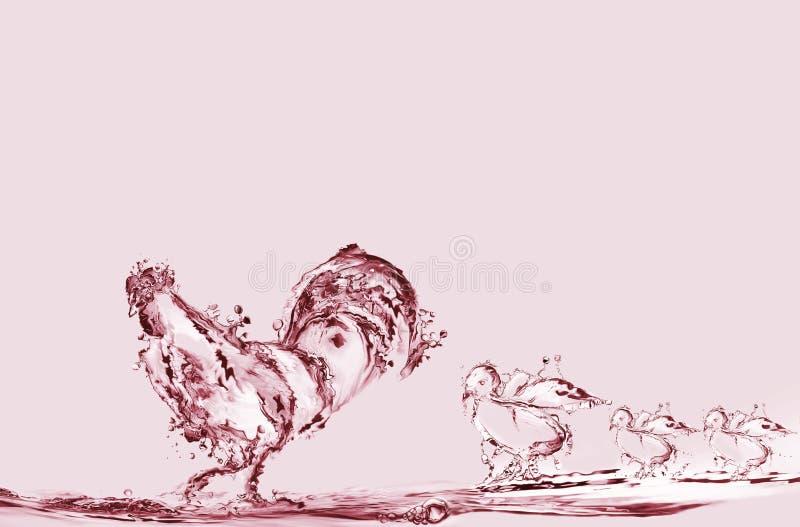 Gallo y polluelos del agua roja
