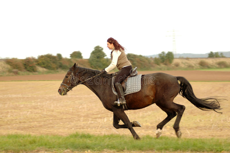 gallop стоковая фотография rf