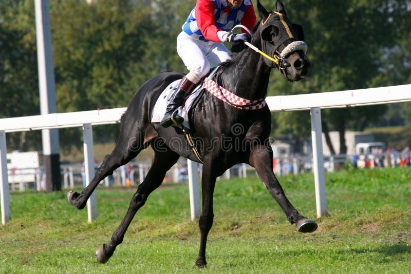 gallop zdjęcie stock