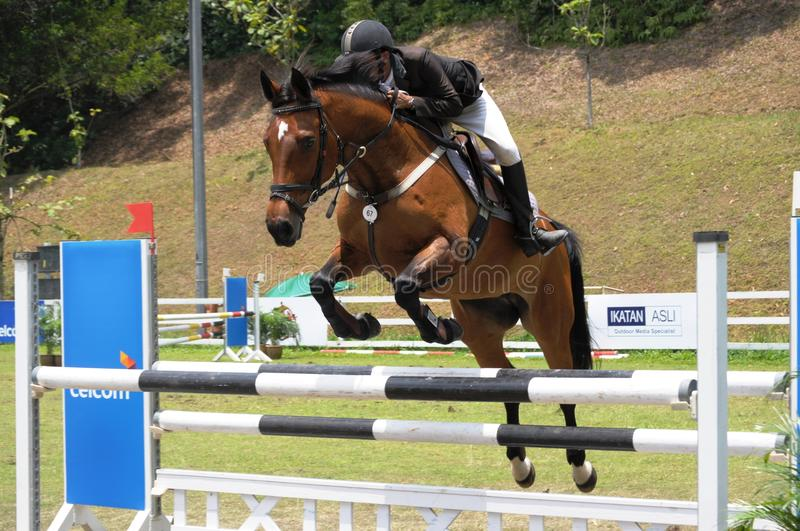 Download Horse Showjumping 2011 editorial image. Image of gait - 19051195