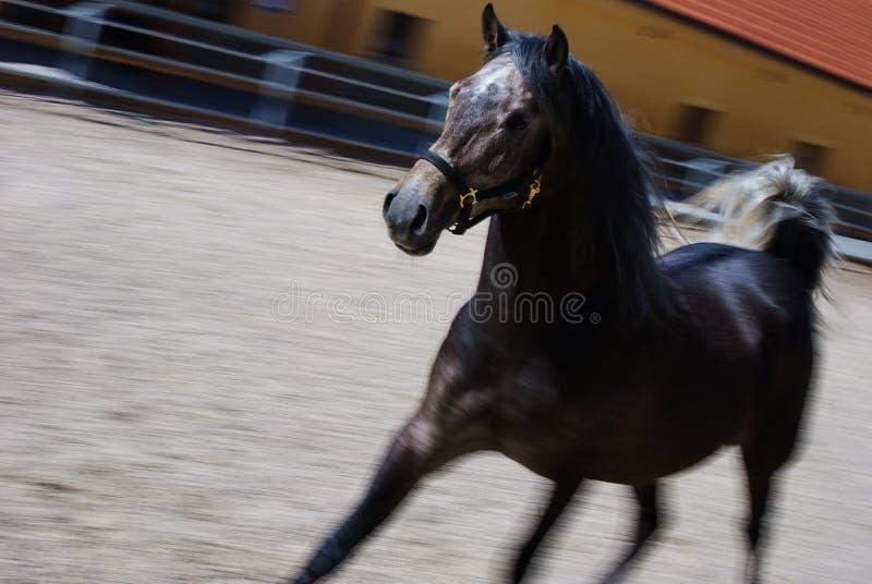 Galloping horse stock image