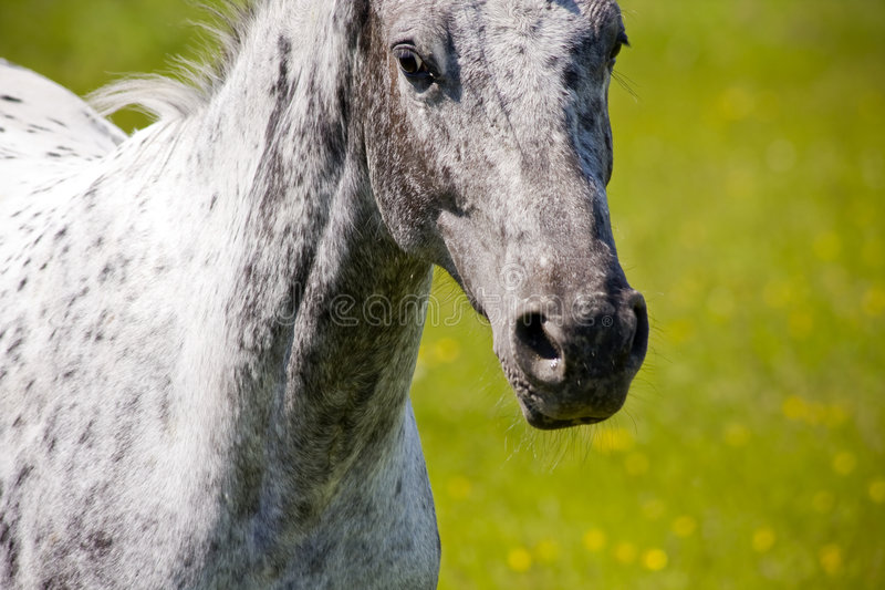 Download Galloping horse stock image. Image of equestrian, green - 5409243