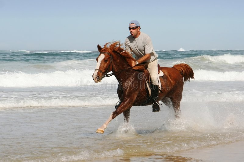 Download Galloping Horse at beach stock photo. Image of equestrian - 5120890