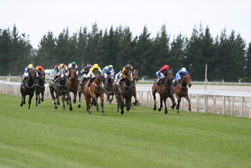 Galloping race horses royalty free stock photo