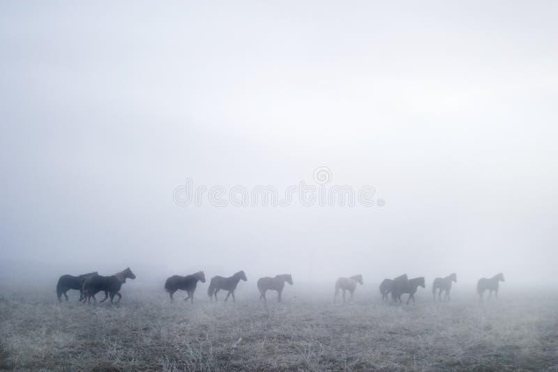Gallping dans le brouillard images stock