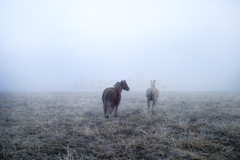 Gallping en la niebla foto de archivo libre de regalías