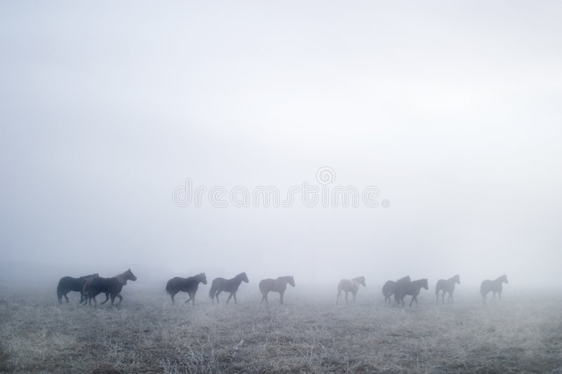 Gallping in the Mist stock images
