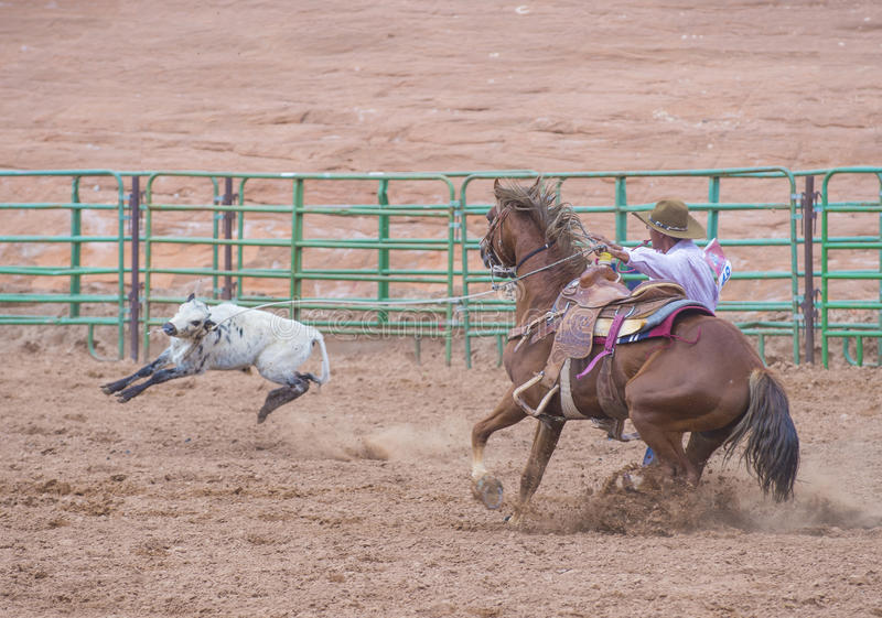 Download Gallup, Indian Rodeo editorial photography. Image of calf - 34172972