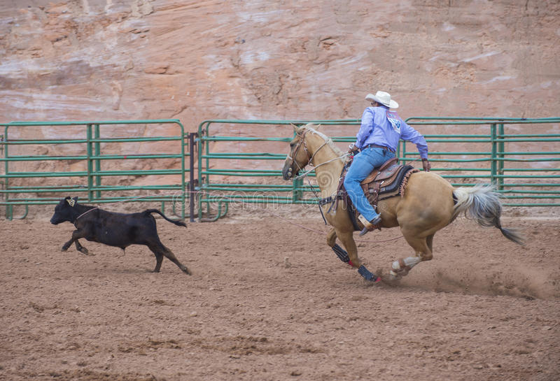 Download Gallup, Indian Rodeo editorial stock photo. Image of livestock - 34663678