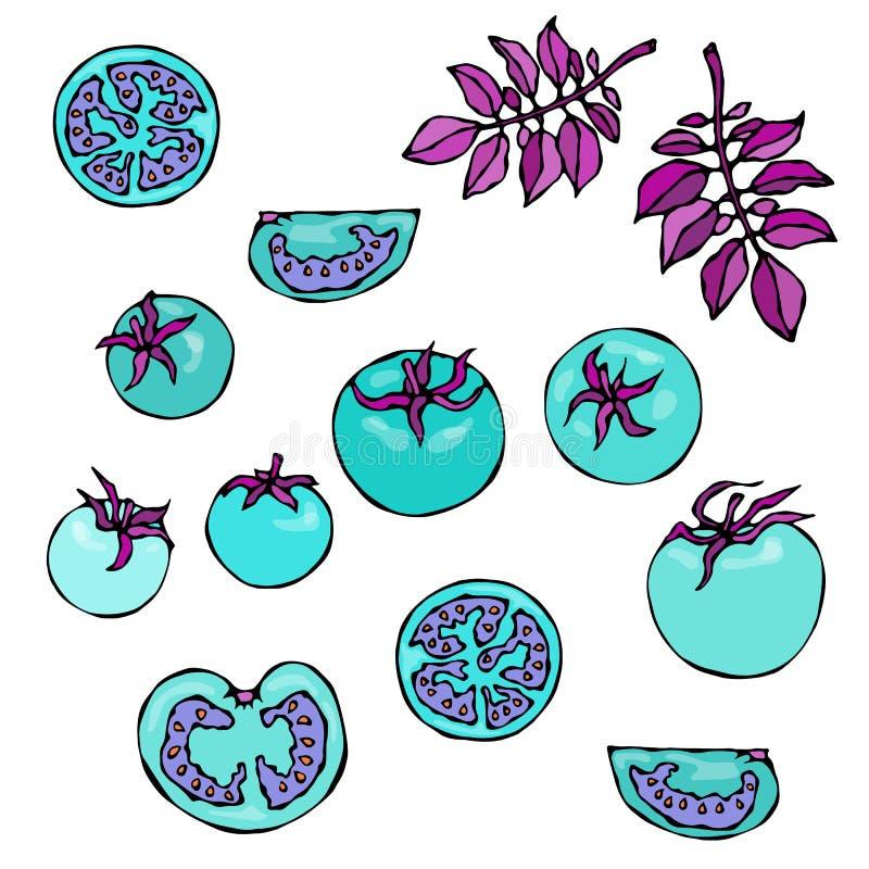 Galna blåa turkostomater med rosa sidor Rov- grönsakserie Realistisk hand dragen illustration Savoyar stock illustrationer