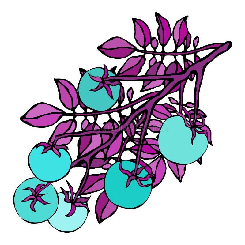 Galna blåa turkostomater Rov- grönsakserie Realistisk hand dragen illustration Savoyar klotterstil royaltyfri illustrationer