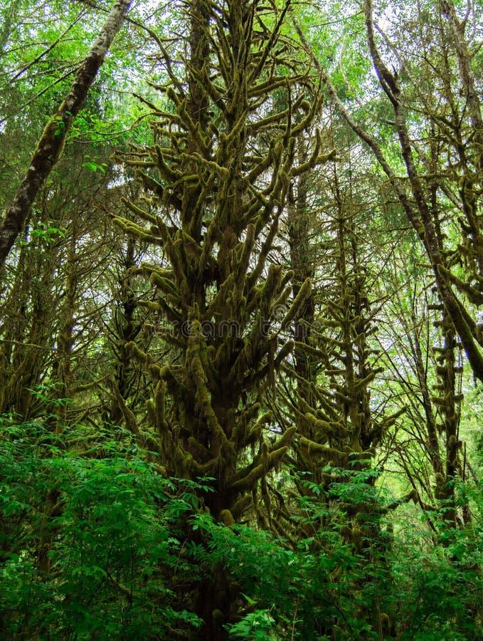Galna mossiga träd arkivfoton