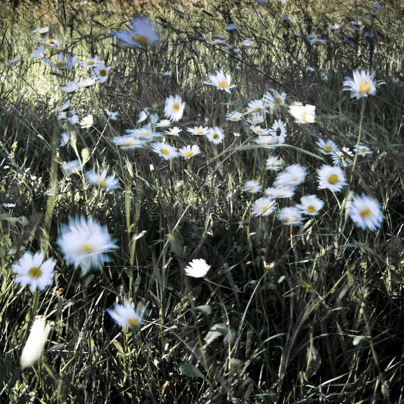 Galna tusenskönor i vinden arkivbild