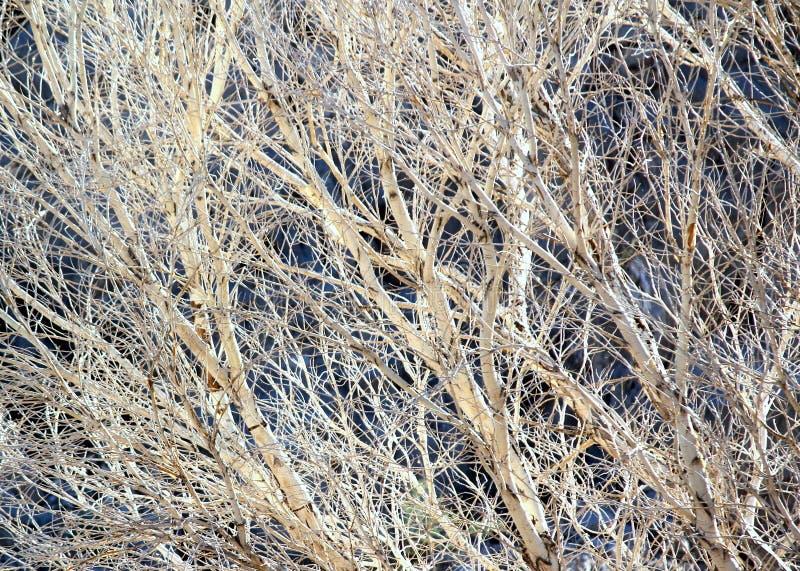 Galna vita trädlemmar trasslade och flätade ihop den blick som en Jackson Pollack målning till arkivfoton