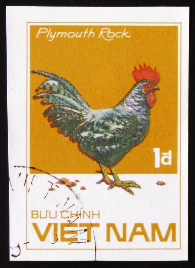 Galo de Plymouth Rock, raças da galinha da série, cerca de 1985 fotografia de stock royalty free