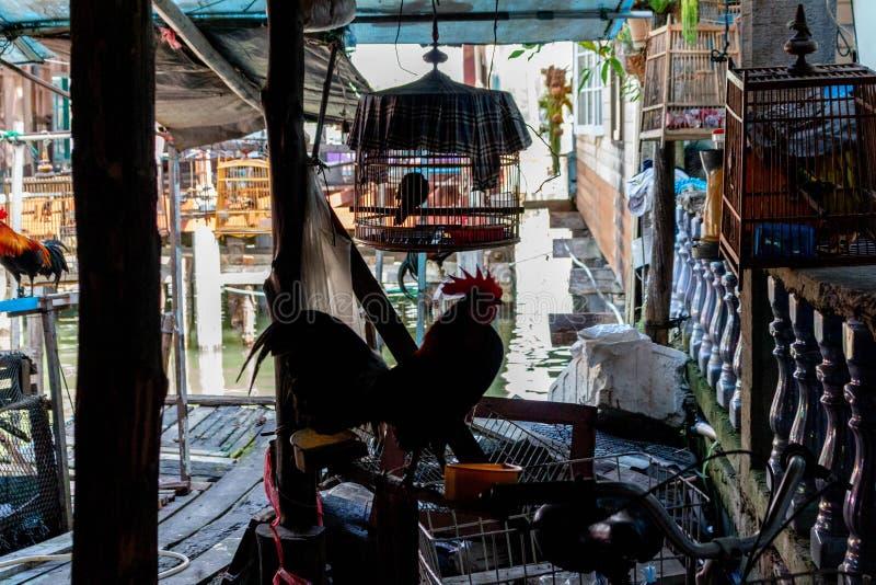Galo no mercado da cidade velha em Koh Panyee Thailand imagem de stock royalty free