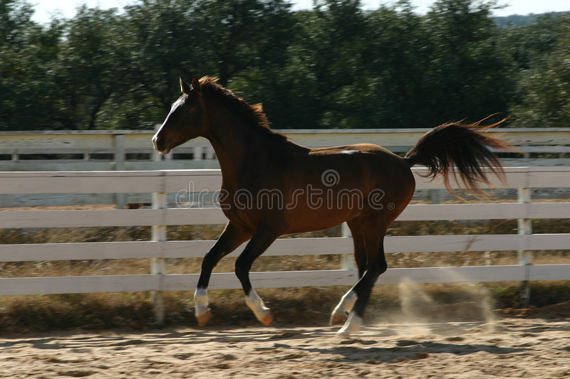 Galop Stock Foto's