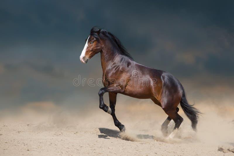 Galope correndo em deserto imagens de stock royalty free