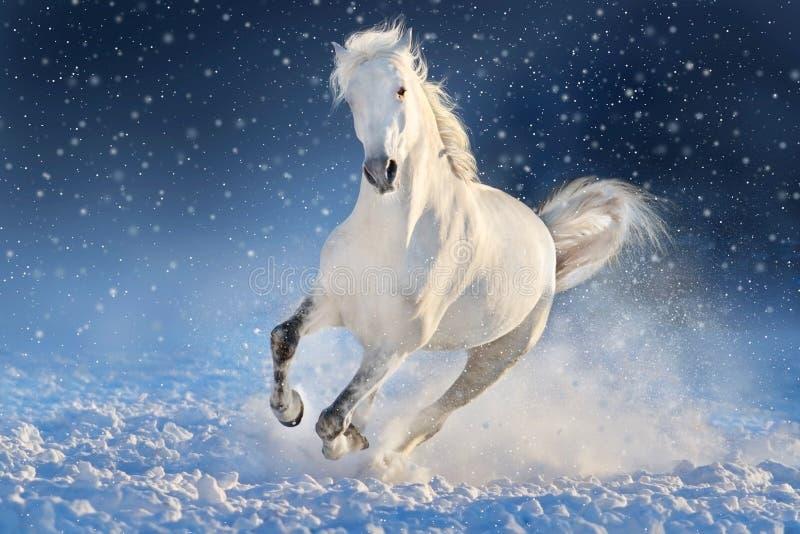 Galope da corrida do cavalo na neve imagens de stock