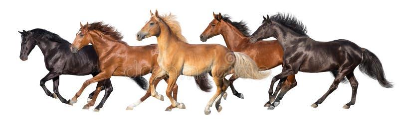Galope de los caballos aislado fotos de archivo libres de regalías