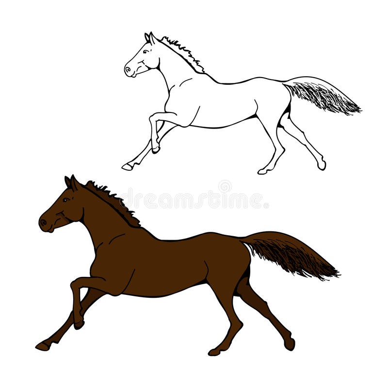 Galope del caballo - imagen del circuito y del color stock de ilustración