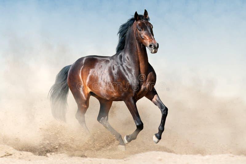 Galope del funcionamiento del caballo fotos de archivo libres de regalías