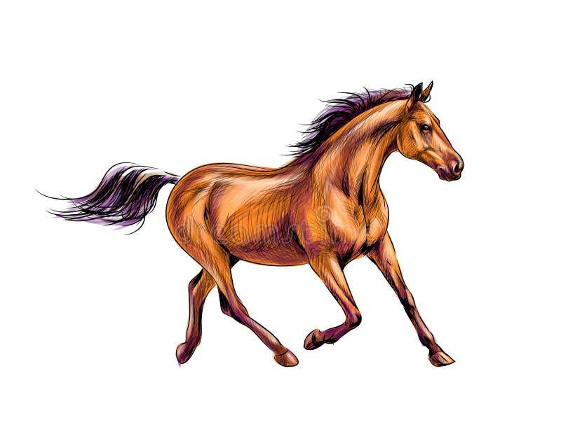 Galope del funcionamiento del caballo del chapoteo de acuarelas Bosquejo drenado mano ilustración del vector