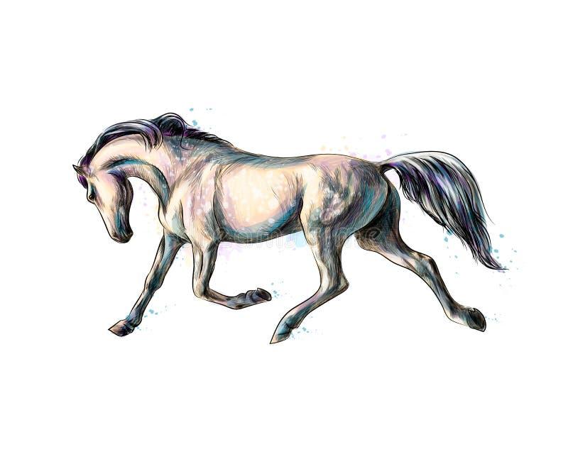 Galope del funcionamiento del caballo del chapoteo de acuarelas Bosquejo drenado mano stock de ilustración