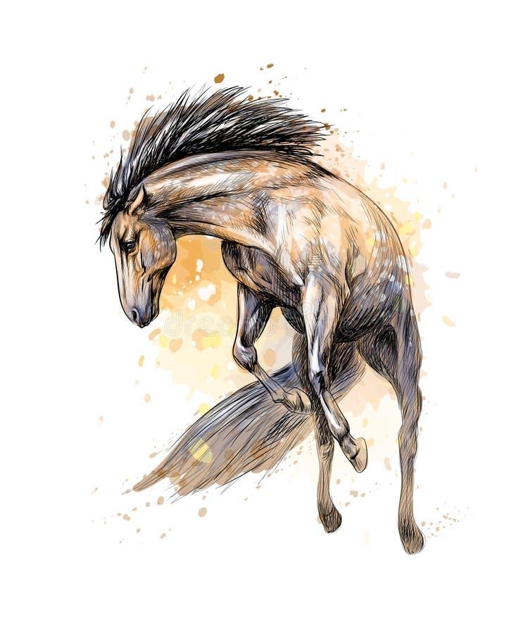 Galope del funcionamiento del caballo del chapoteo de acuarelas Bosquejo drenado mano libre illustration