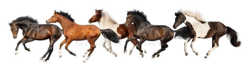 Galope del funcionamiento de los caballos aislado fotos de archivo