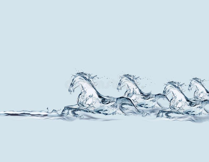 Galope dos cavalos da água fotografia de stock royalty free