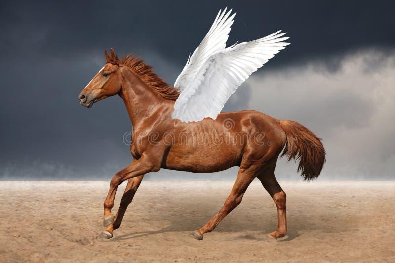 Galope marrón hermoso del caballo de Pegaso salvaje en el cielo stock de ilustración