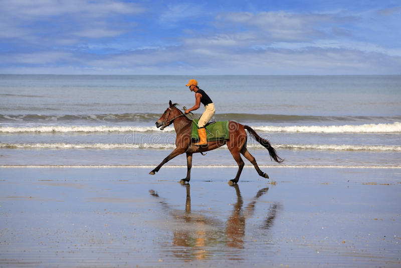 Galope na praia fotografia de stock royalty free